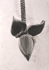 http://clementinemay.fr/files/gimgs/th-35_la_vie_sous_verre_fleur.jpg